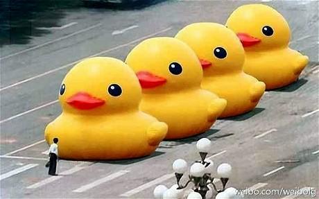 ducks_2590671c
