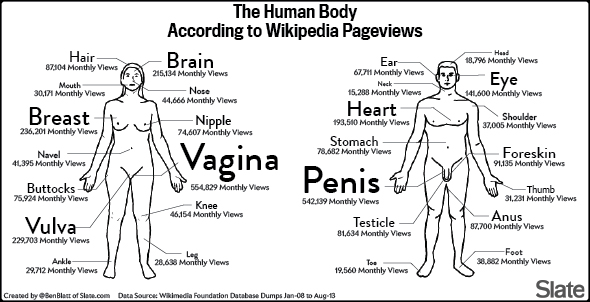 human_body_wikipedia