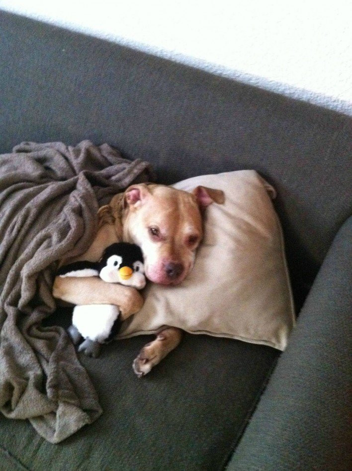سگ و تاکس